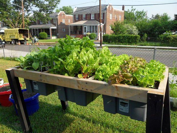 diy Self Watering Veggie Table Rain gutter garden system