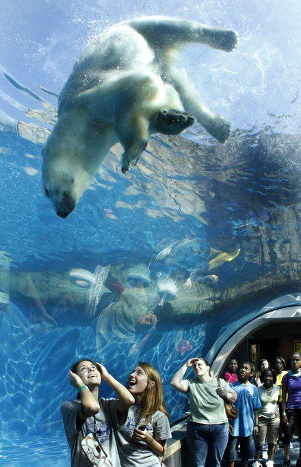 Pittsburgh Zoo & PPG Aquarium | Pittsburgh | Pinterest