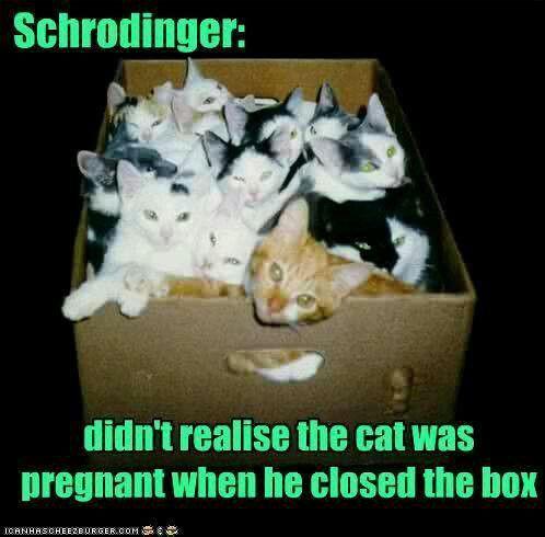 schrodinger cat costume  Via Melinda Henegar
