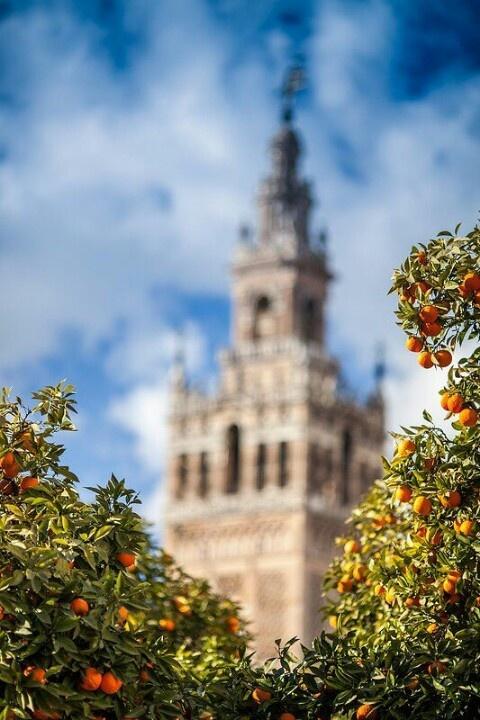 Patio de los Naranjos y La Giralda-Sevilla