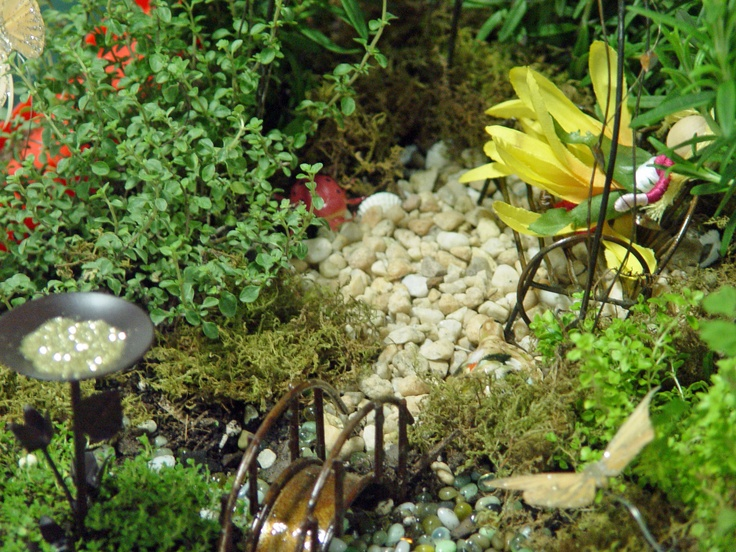 Container fairy gardens fairy miniature gardening pinterest - Fairy garden containers ...