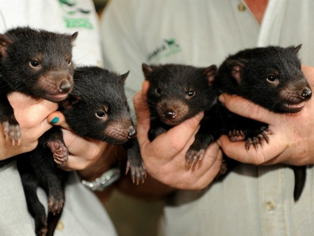 Baby endangered animals