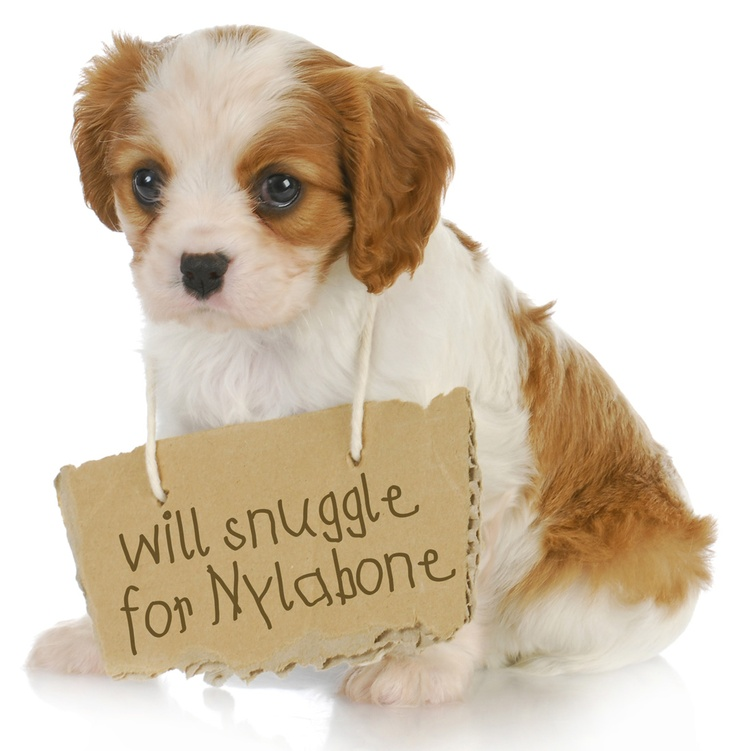 What would YOUR dog do for a Nylabone? In our opinion, this is a win-win scenario :) #dog #dogs #cute #nylabone