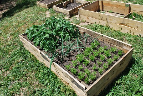 Simple Diy Pallet Raised Garden Beds When I Get A Yard 400 x 300