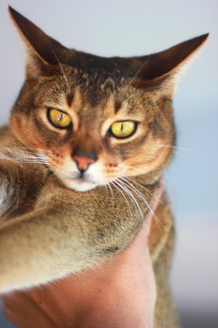 Lionel wild cat.