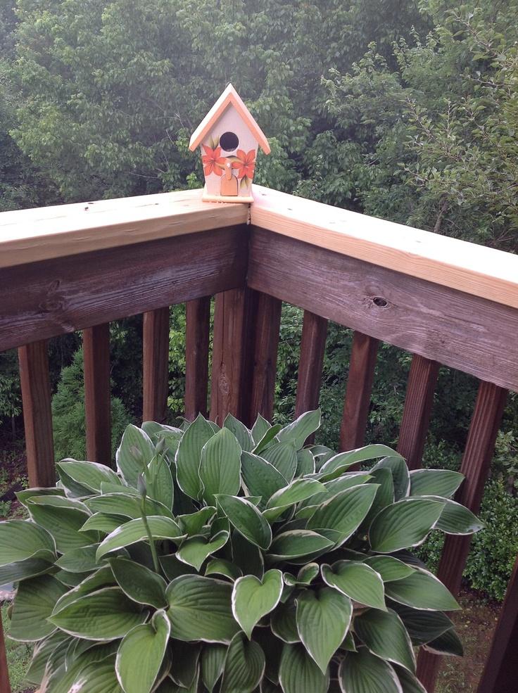 Casa para p jaros a todo color garden jardin pinterest - Todo para la casa ...