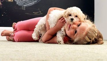 Pin by RPM Carpets & Floor Coverings on Flooring Cleaning, Care & Mai ...