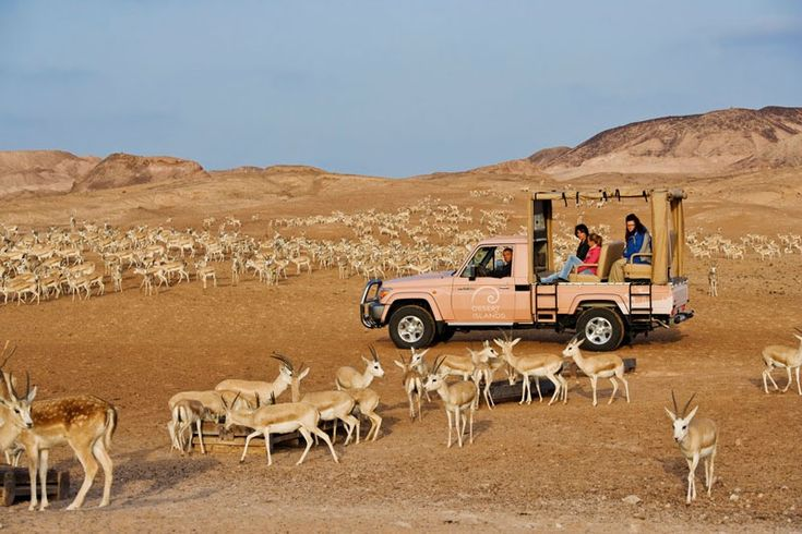 Sir Bani Yas Island United Arab Emirates