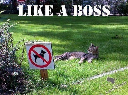 when can cat's relax outdoors  - when there are no dogs
