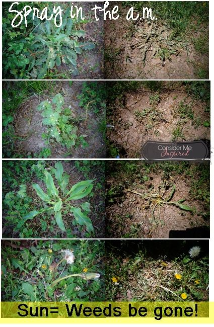 Homemadeweedkiller homemade weed killer gardening pinterest