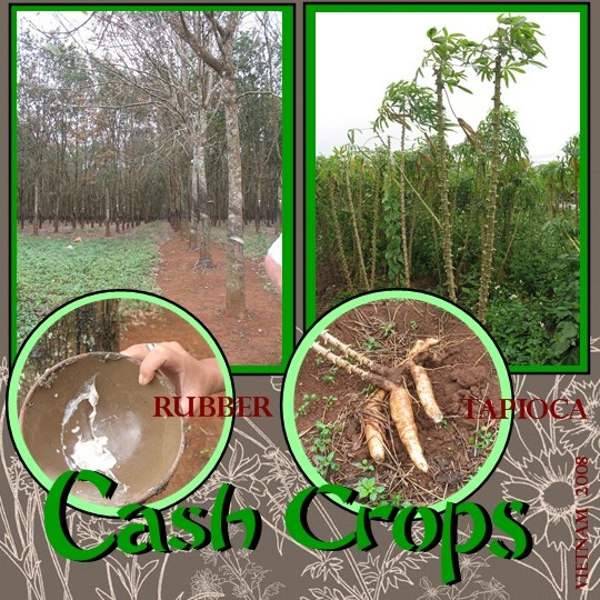 Vietnam Cash Crops on 423 html