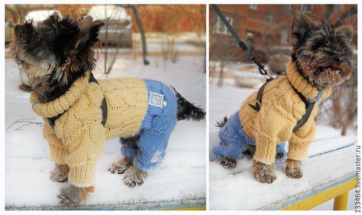 Вязаная одежда для собак своими руками для начинающих