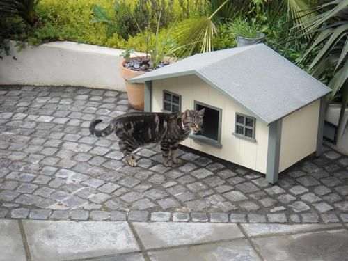 Outdoor Cat house , Beachhouse 3 Cathouse , Cat kennel , | eBay