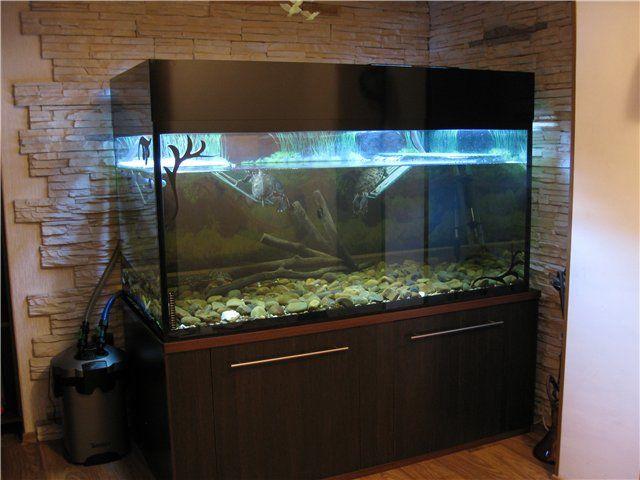 turtle tank Household Related Pinterest