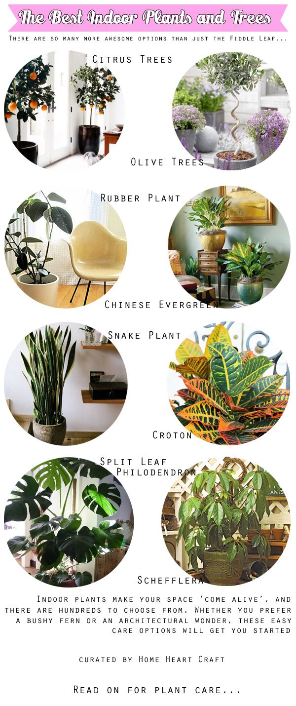 The Best Indoor Plants and Trees. Kinda over the Fiddle Leaf - Home Heart Craft