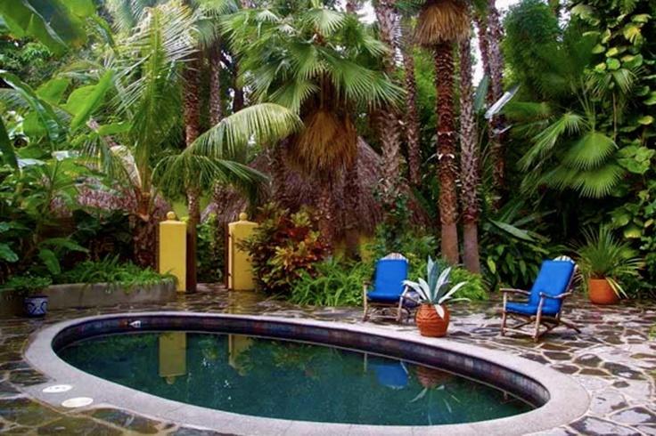 Plants for pool area backyard ideas pinterest for Plants for pool area