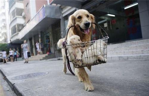 Πηγαίνοντας για ψώνια.