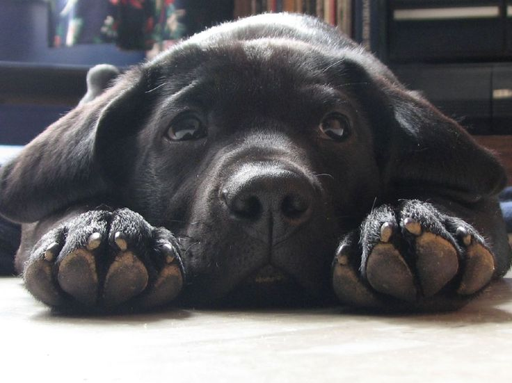 I love puppy paws :)