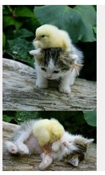 Oh my gosh, that's just too cute!