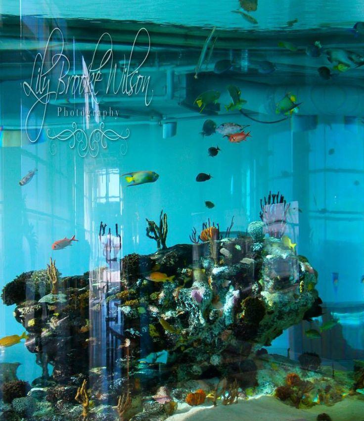 Aquarium In Charleston Sc Lily Brooke Wilson
