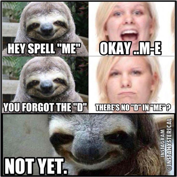 OMG hahah creepy sloth   HILARIOUS Funny   Pinterest