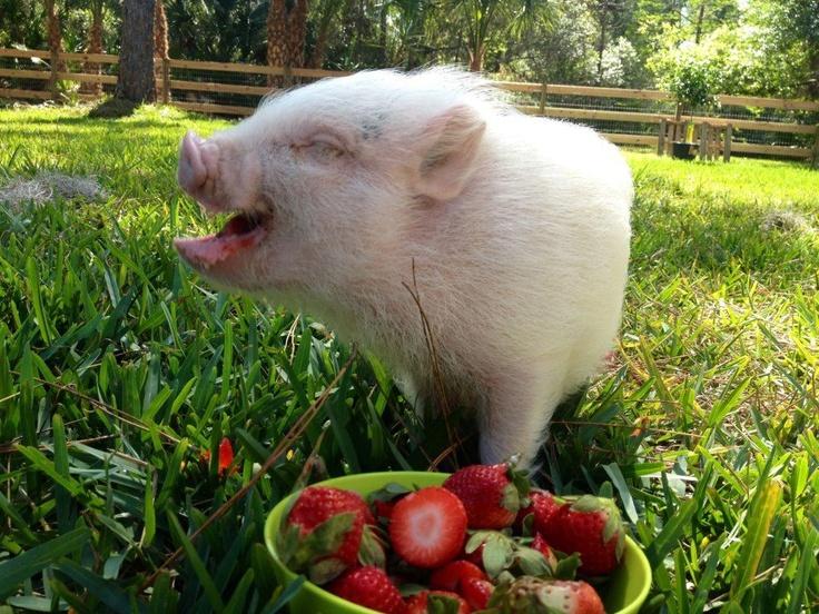 top men wallets Happy piglet  Bound to Melt Your heart