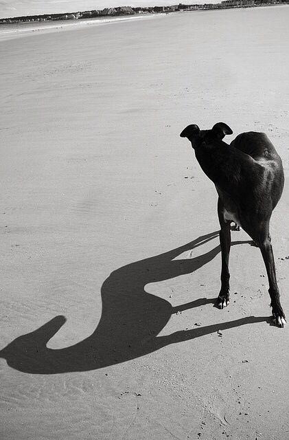 Le Greyhound D7ac9ef4c69c92aec694ad96862271b5