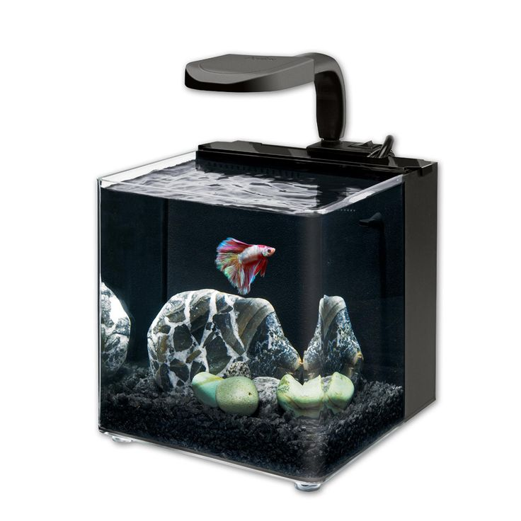 aqueon evolve led aquarium kit 10 5 l x 10 5 w x 11 5