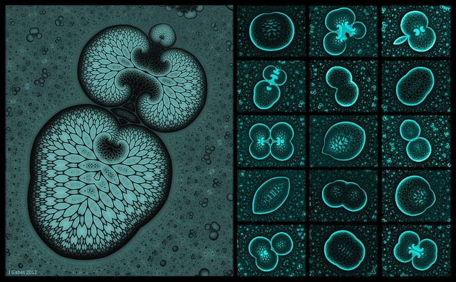 Microscopic image showing a set of spores by J.Gabás Esteban, via Flickr