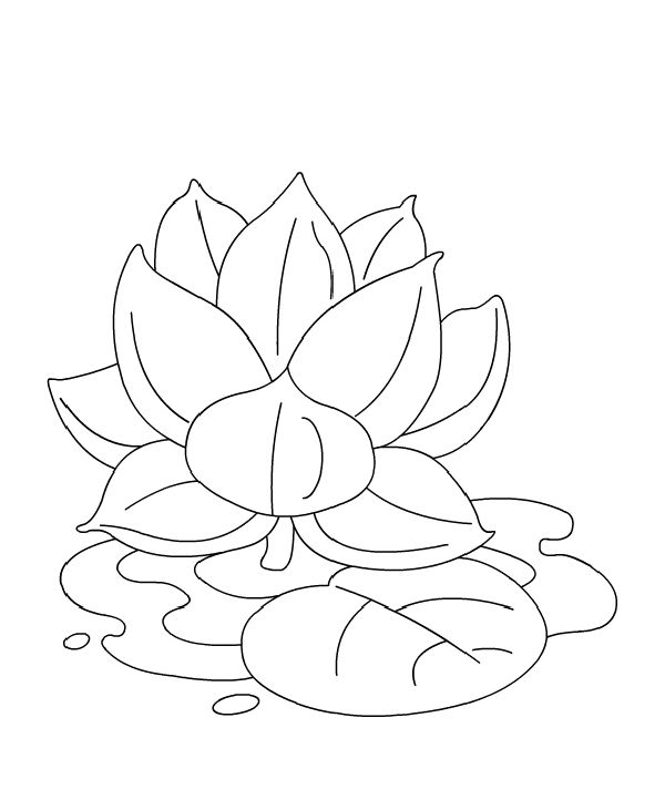 Lotus flower coloring pages free sketch coloring page for Lotus flower coloring pages free