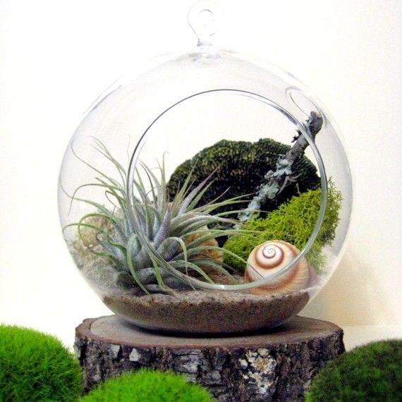 Spiral Air Plant Terrarium.