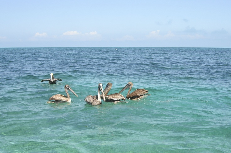 Holbox Island Mexico  City pictures : Holbox Island, Mexico | My birds | Pinterest
