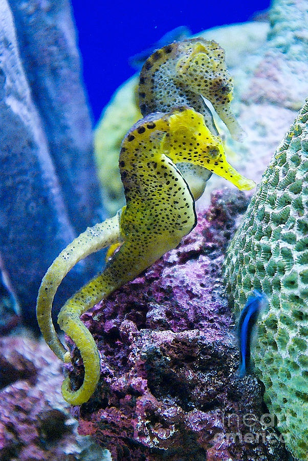 Pin by debra galarneau on the beautiful seahorse pinterest for Jims exotic fish
