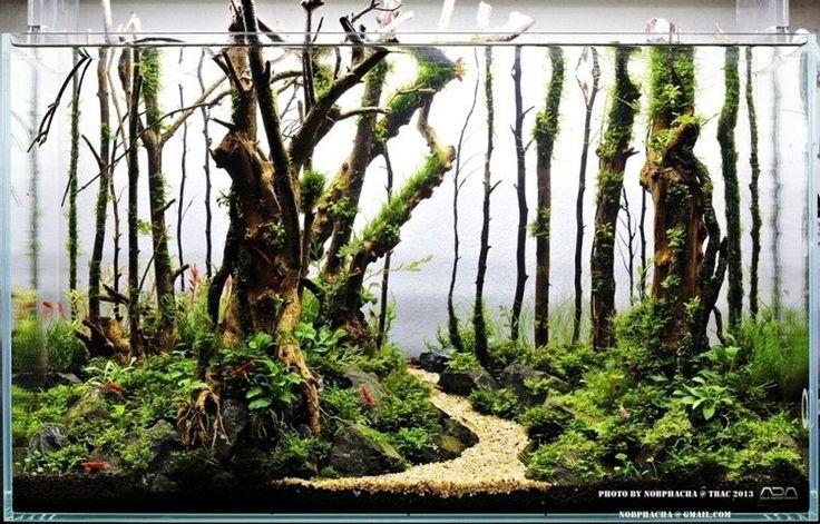 Magical Forest aquascape Project Pond Pinterest