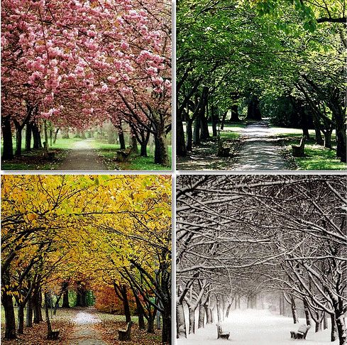 take a photo of a place through all four seasons