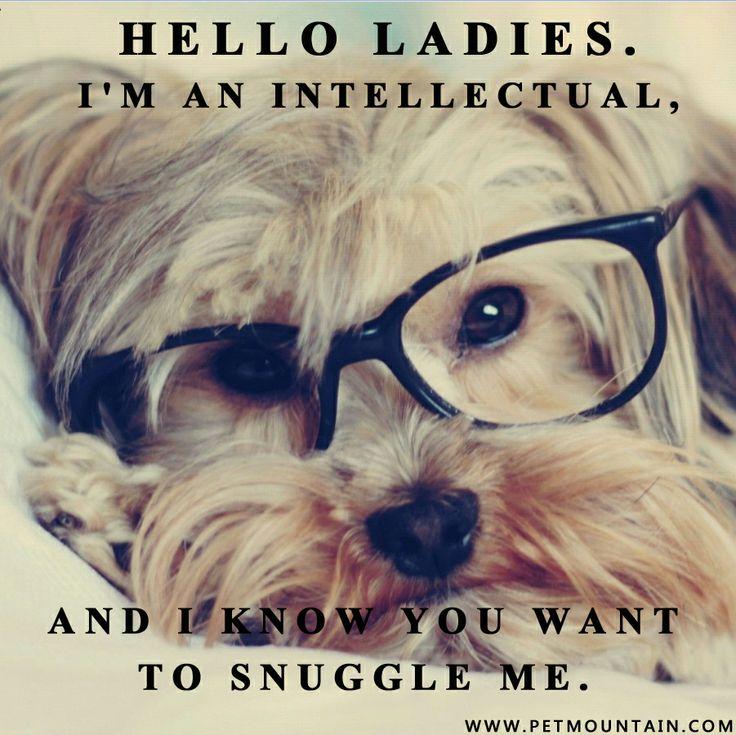 Intellectual Meme: Pin By PetMountain.com On Animal Memes