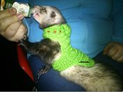 Mass ferret by Amales seen via Rampaged Reality & BioWare Blog