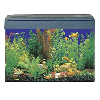 Eclipse 30 gallon fish tank what 39 s your tank history for Sea clear fish tank