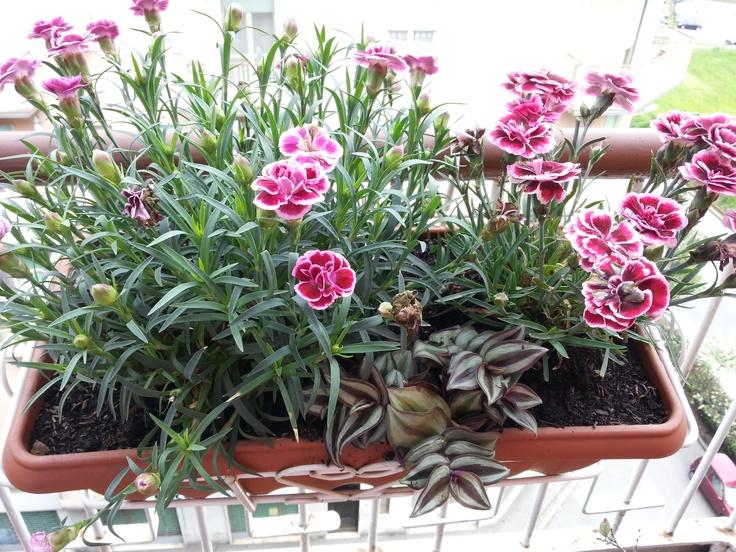 Che piante avete sul terrazzo in pieno sole forum di for Piante in vaso pieno sole