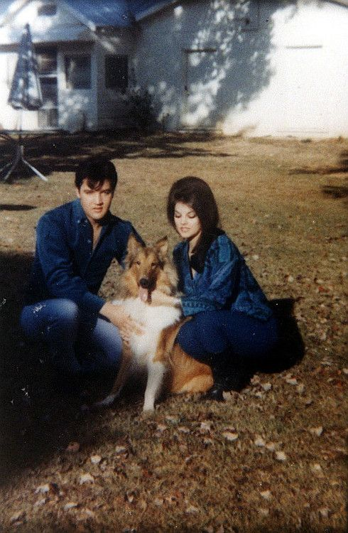ladypresley:  Elvis and Priscilla Beaulieu with their pet Collie, Baba, 1965.