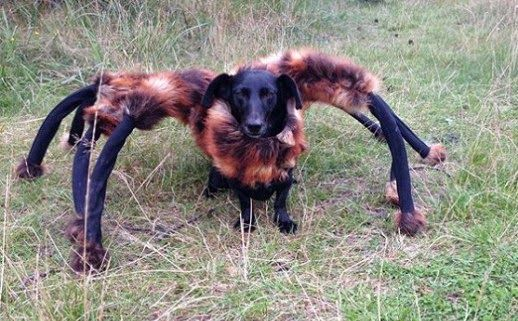 foto Hilarious Prank When Dog Dressed as Spider Terrifies Passers-By