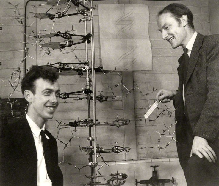 "a research on james watson and francis crick 1962 physiology or medicine prize - francis crick & jim watson "" for their discoveries concerning the molecular structure of nucleic acids and its significance for."