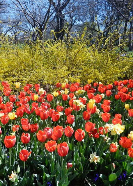 Pin by lorene sheehan on texas the lone star state pinterest for Tulip garden in texas