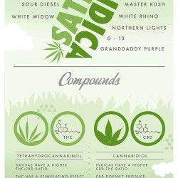 breakdown of the major differences between sativa & Indica