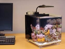 ... fish-tanks-sc/ to see the full range of assorted fish tanks on offer