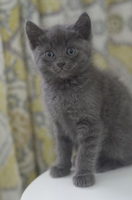 Gray Male Cat Names