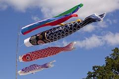 Fish kites at the Japanese Festival