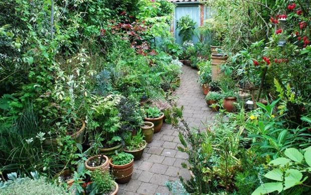Small gardens to visit this summer telegraph for Landscape gardening for small gardens