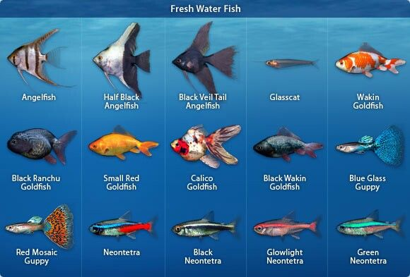 types of freshwater aquarium fish for the home pinterest