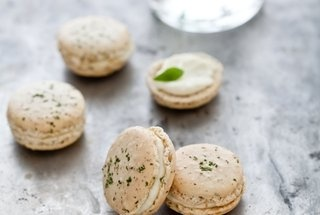 Pin by Catharine Hudman on Verbena and Chocolate Mint | Pinterest